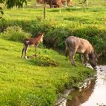 Donkey and baby at farm