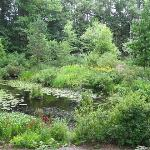 Lily Pond area as viewed from trail above