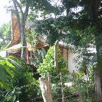 The Main House, through trees