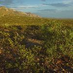 landscape at oliver lee campground