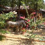 the Zebra Suite
