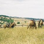 Cowboys on the range