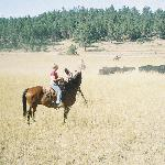 Guest - working cattle