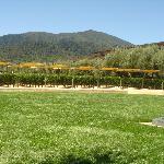 .....Robert Mondavi winery
