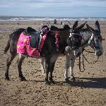 Donkeys on the beach