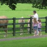 Horses at Hotel, free horseback riding