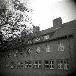 Buchenwald Foto