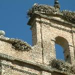 stork nests on local church