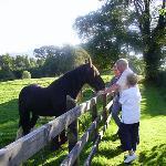 Prince the horse enjoying a mint