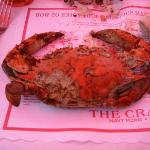 The Crab Claw