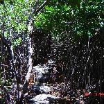 entrada a cenote en la entrada de sian kaan