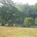 Back yard at the Jungle Dome