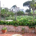 Mami Camilla's vegetable garden