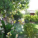 Garden of Tortuga