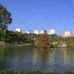 Torremolinos.Parque de la paloma