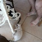 Snowball, Vencia's resident kitten.