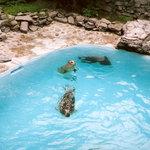 Niagara Aquarium Seals Habitat