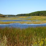 Wellfleet Bay Sanctuary 9.2007