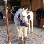 Horse lovers' heaven.