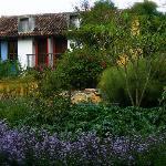 Bungalows in garden