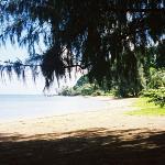 Plenty of shade at 'Anini Beach