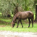 Horse on Property