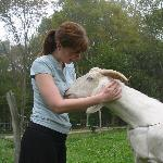 The goats are friendly, too.  Feed them leaves from the apple tree and they'll be your friend!