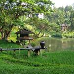 Rice Paddy on the grounds of 4 Seasons