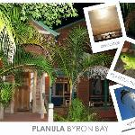Planula post card 2007