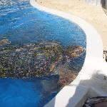 Sea Turtles at the Tamar Project - Praia do Forte