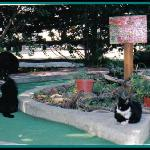 The cats will help you get a hole in one!