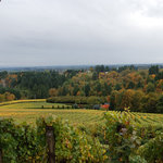 Vineyards at Archery Summit, 10-07