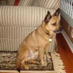 odie, the friendly dog