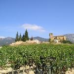 Samaniego from local vineyard
