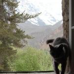 View from our room, with the refugio's cat