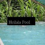 Heilala Pool
