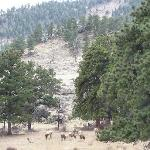 some elk