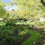 More of garden