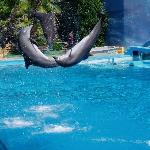 Dolphins at Zoomarine