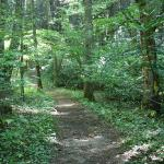 Roan Mountain State Park Trail