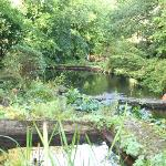 Gidleigh's water garden