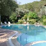 Olive Garden Pool