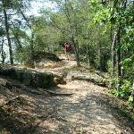 Harpeth River Overlook Trail 2