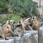 The Ranthambore welcome crew