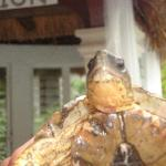 turtle escaping from the cenote