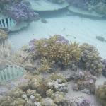 coral nursery at BBP