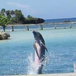 Dolphin at Antony's Key