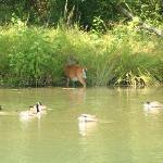Big Ridge State Park- Mingling Wildlife