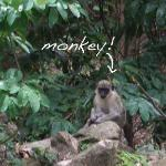 monkey on the side of the road!