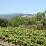 Sunstone Vineyards